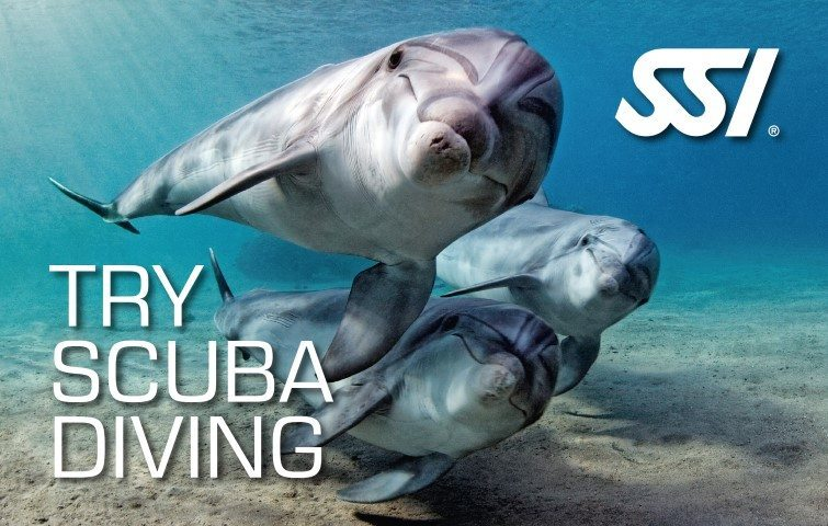 Try SSI Try Scuba Diving | SSI Try Scuba Diving Course | Try Scuba Diving | Basic Course | Diving Course | Eko Divers