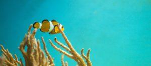 Dive Destination EKO | Eko Divers