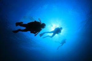 Specialty   Eko Divers