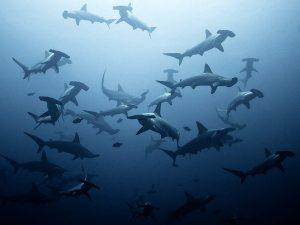 EKO featured Lombok | Eko Divers