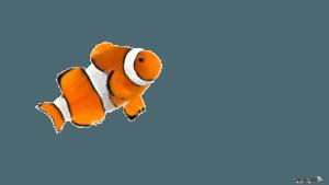Clownfish | Eko Divers